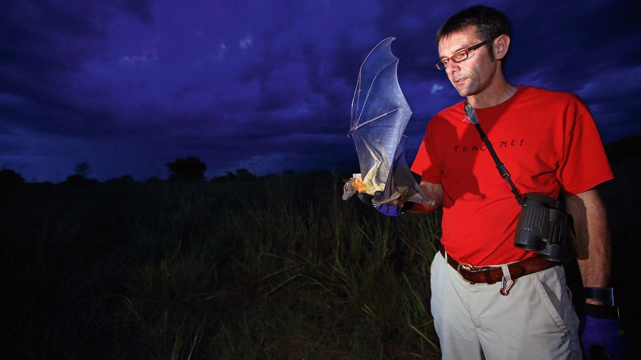 Le Prof. Dr. Martin Wikelski, Responsable du projet ICARUS, enquête sur les déplacements des chauves-souris frugivores.